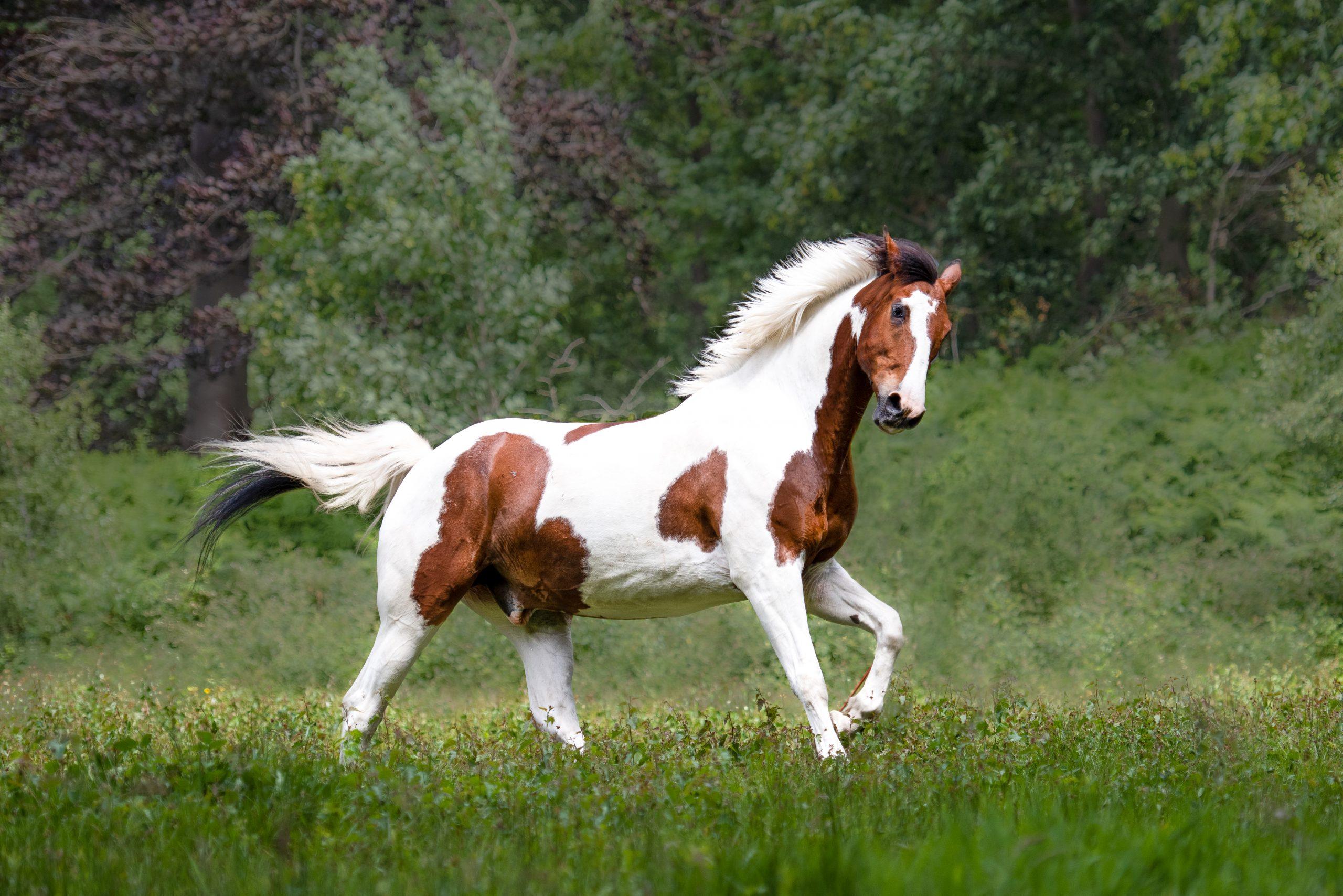 paardenfotografie Pawshoot hondenfotografie