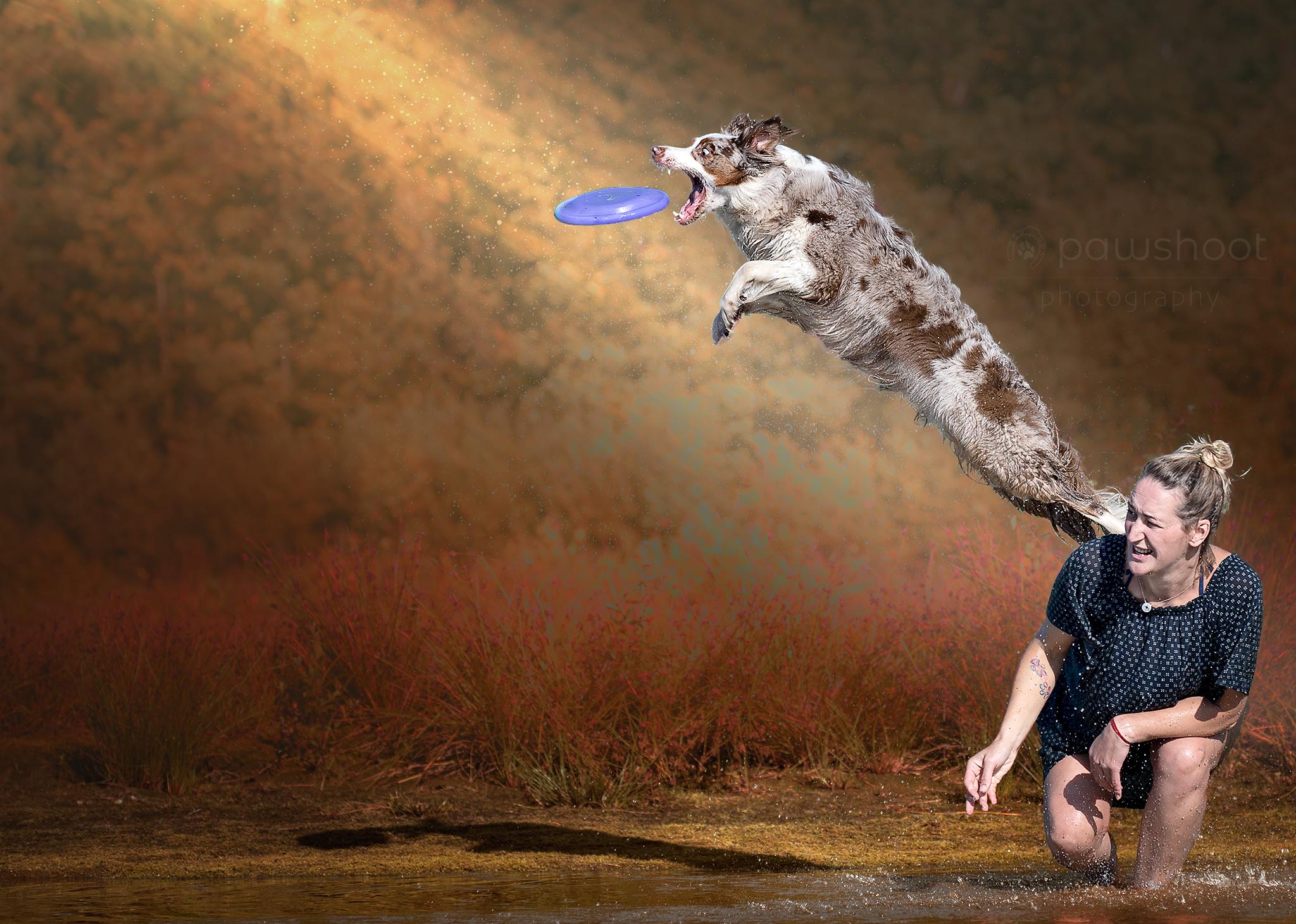frisbee hond in actie Pawshoot hondenfotografie