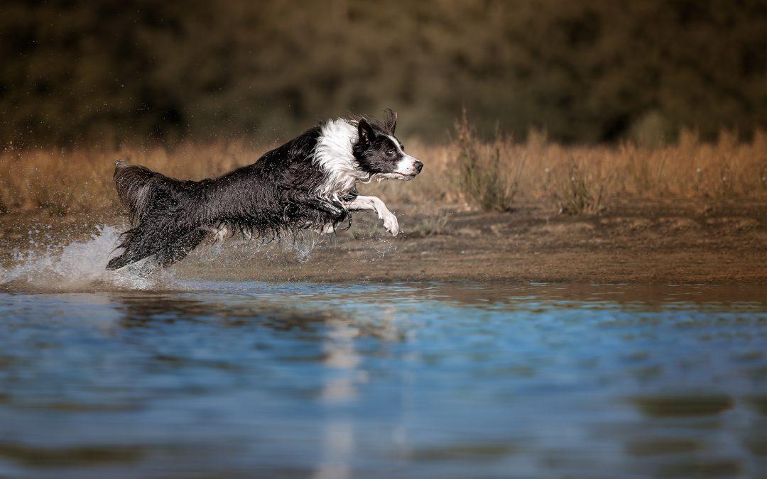 Hondenfotografie foto bewerken gratis tips