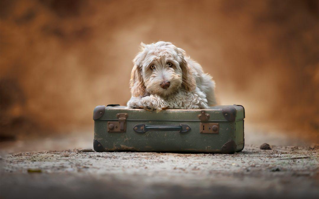 Pestkopjes in hondenfotografie en hoe ze te vermijden ! Deel 1/4