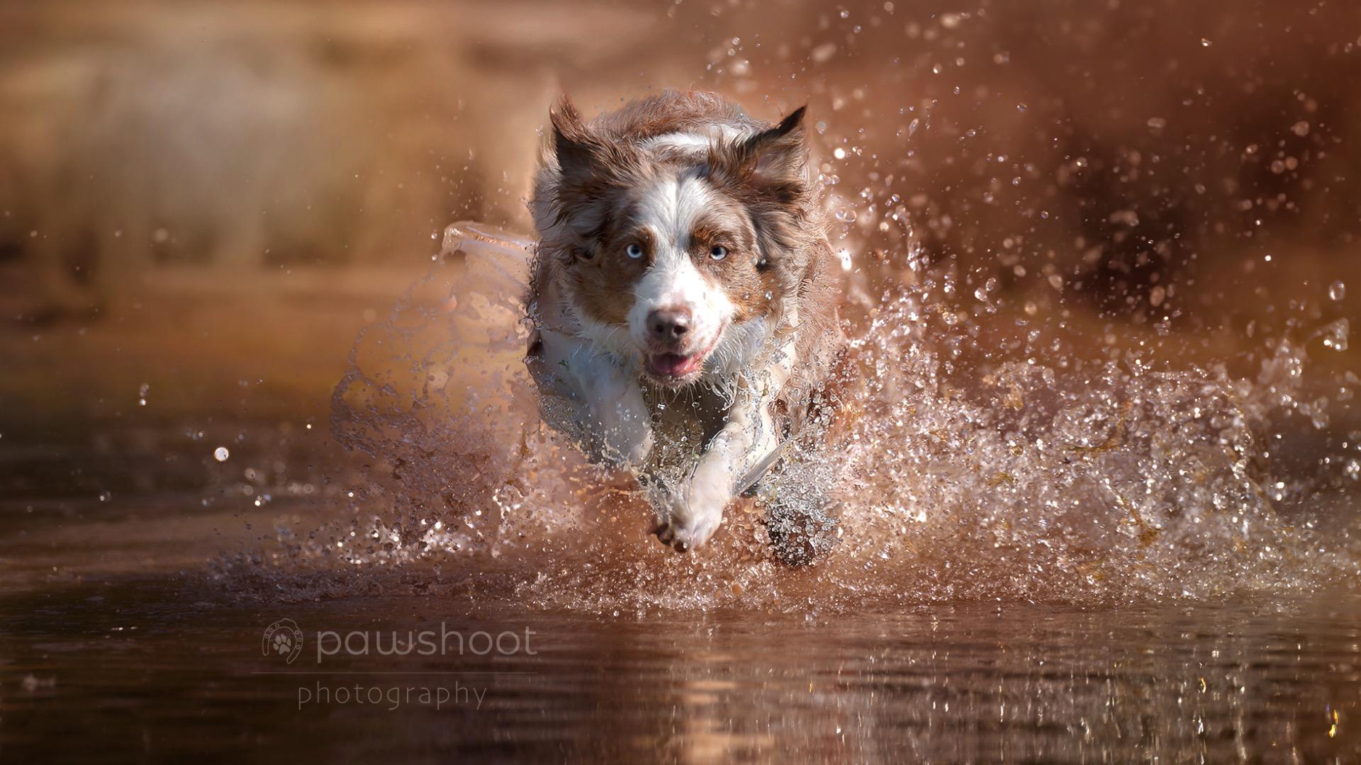 hond in actie zoom.nl Pawshoot hondenfotografie
