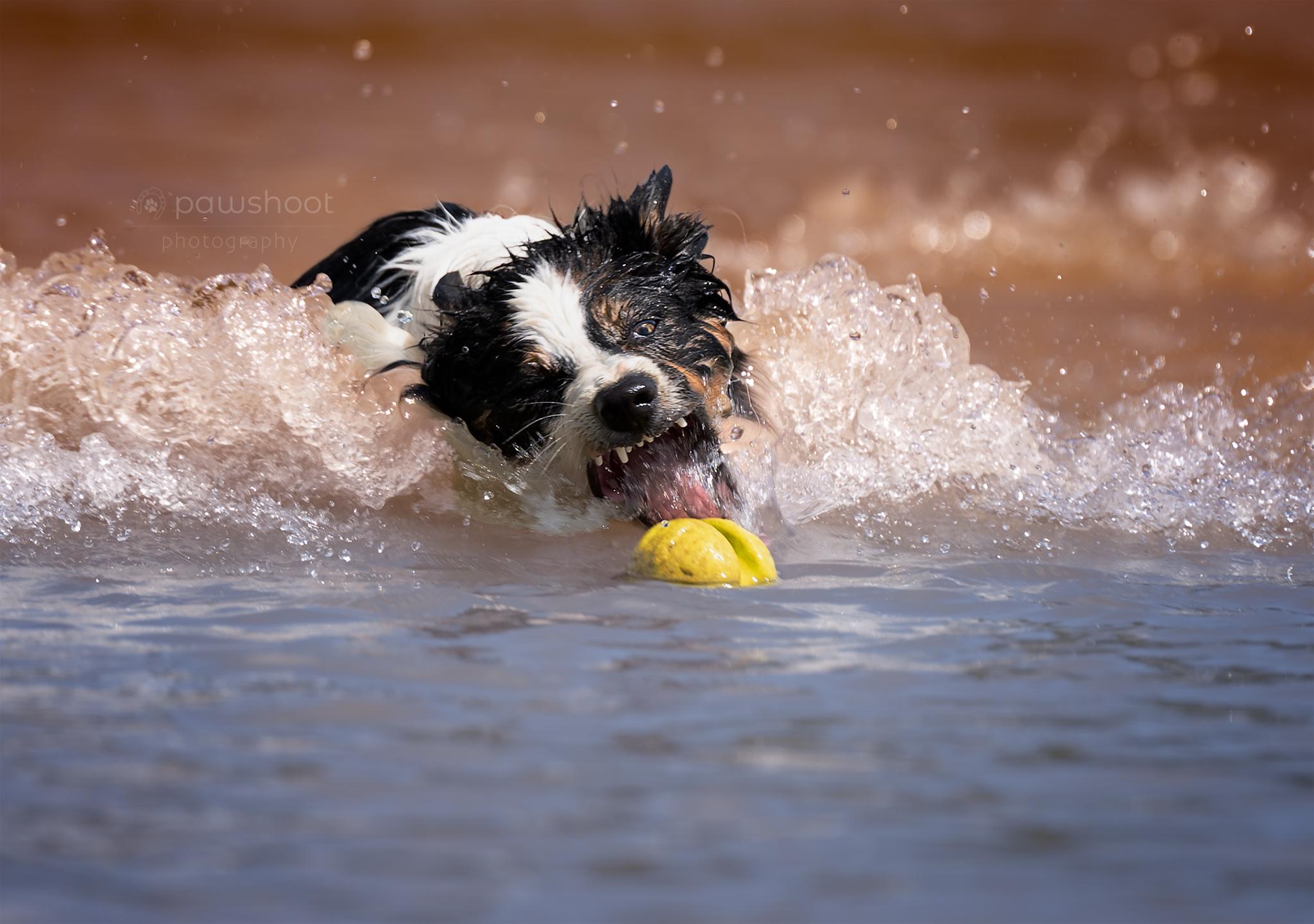 hond en waterbal Pawshoot hondenfotografie