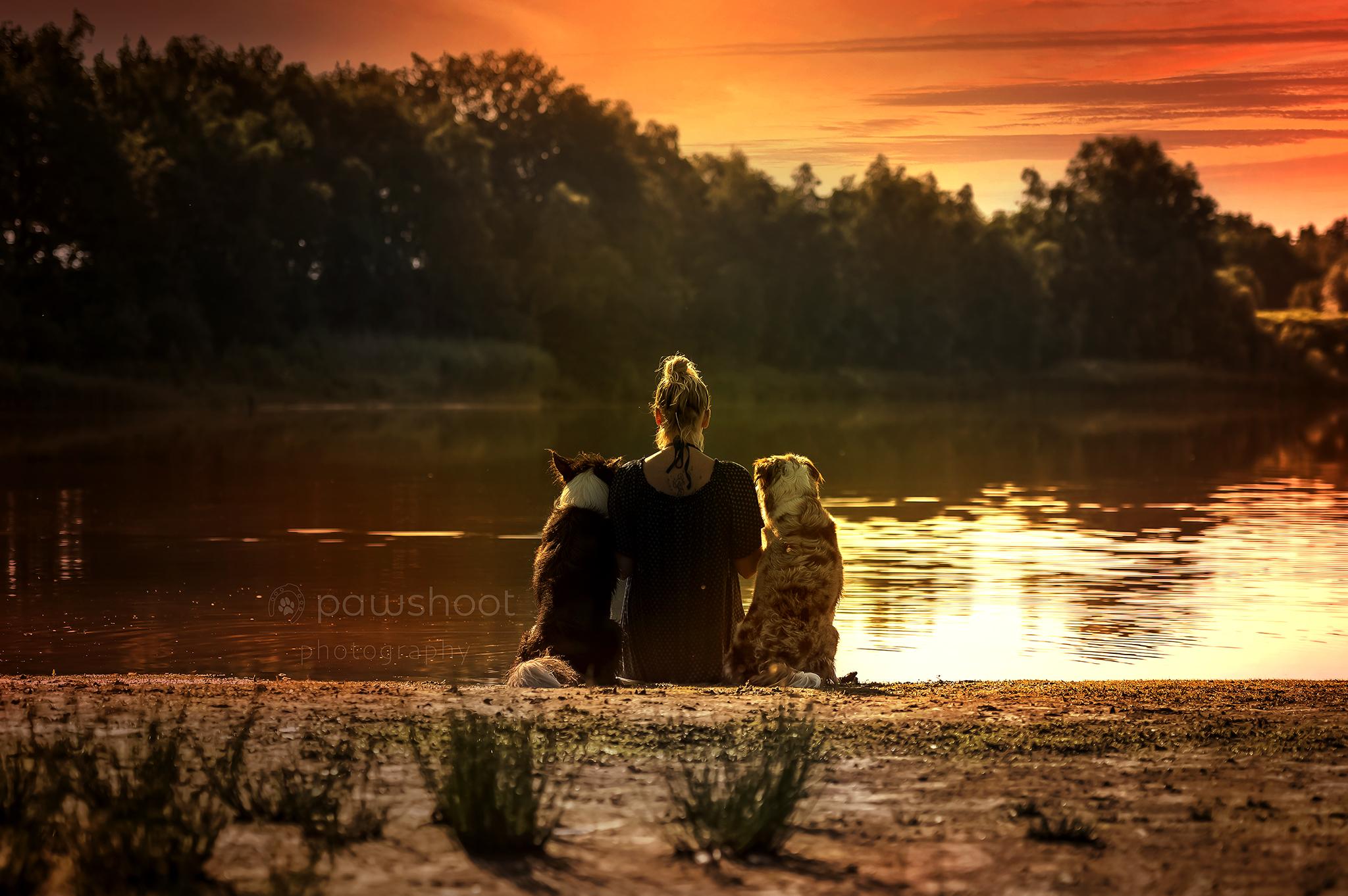 hondenportret zonsondergang Pawshoot hondenfotografie