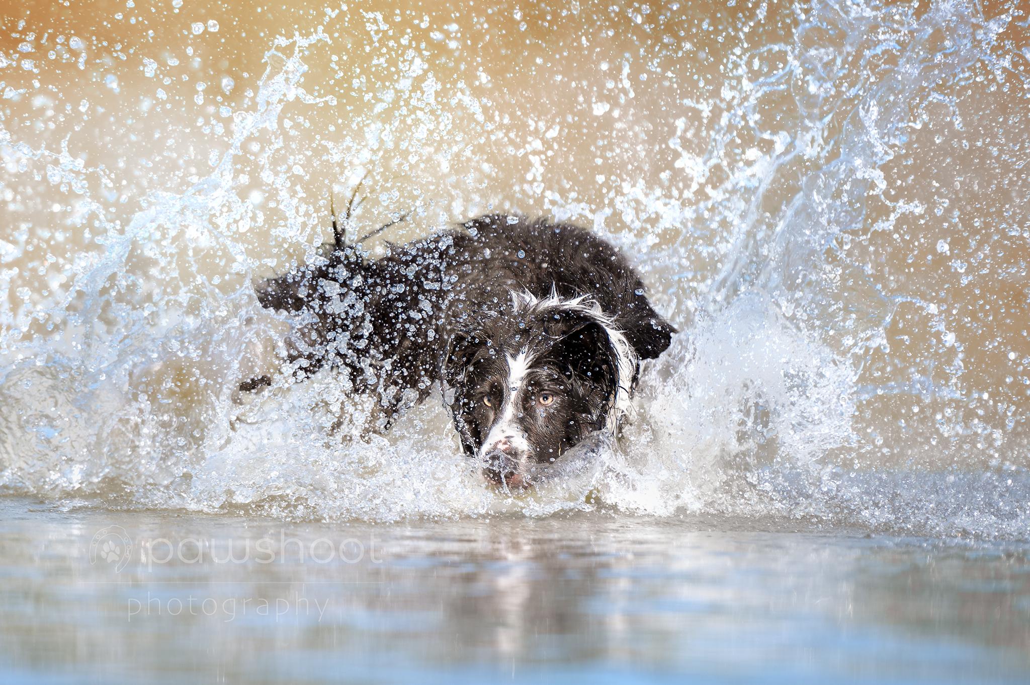 wateractie hond Pawshoot hondenfotografie