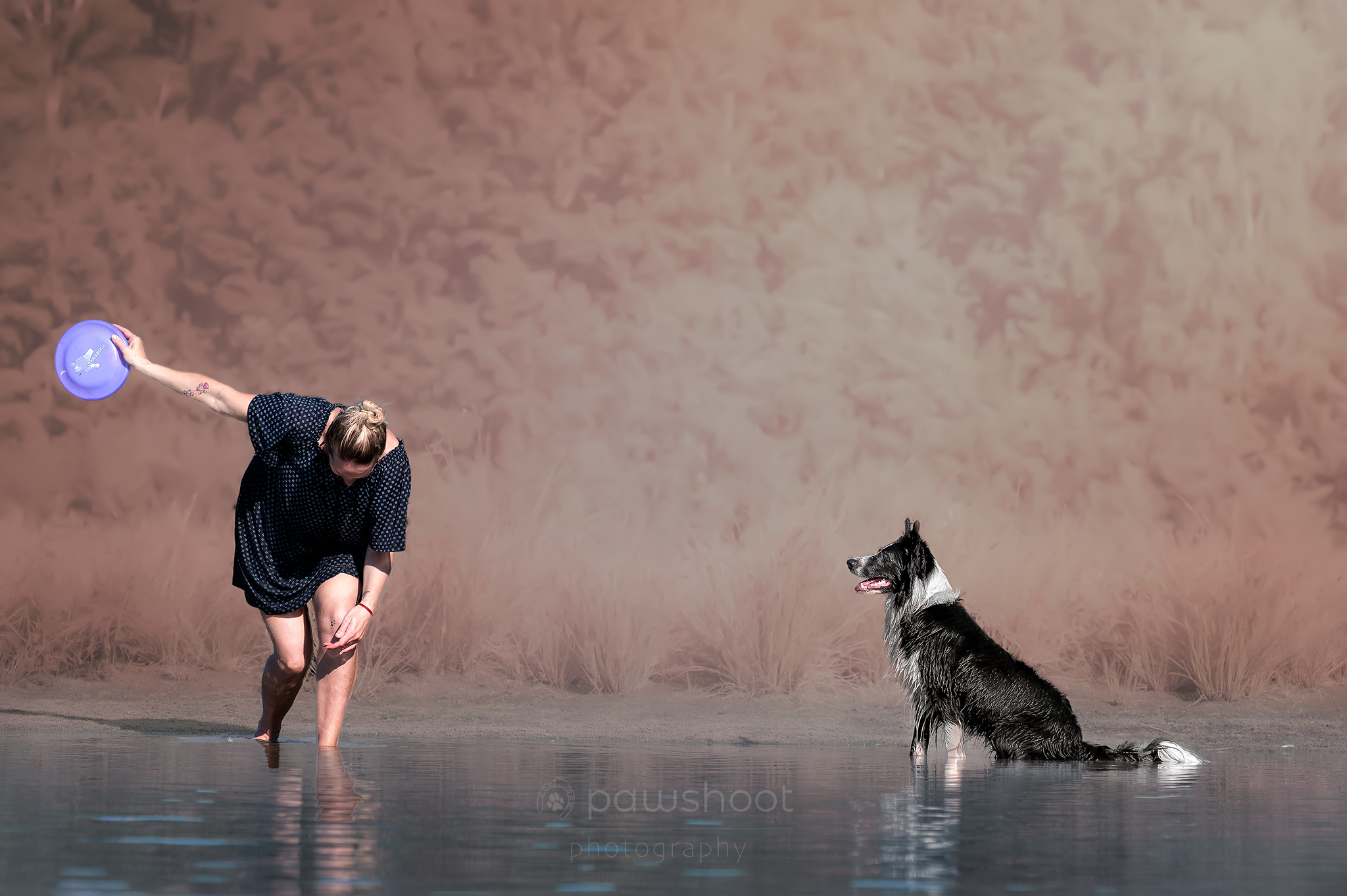 hond en frisbee start Pawshoot hondenfotografie