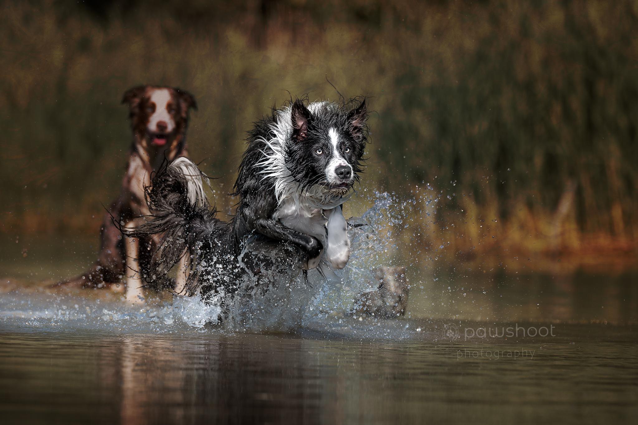 honden in actie Pawshoot hondenfotografie