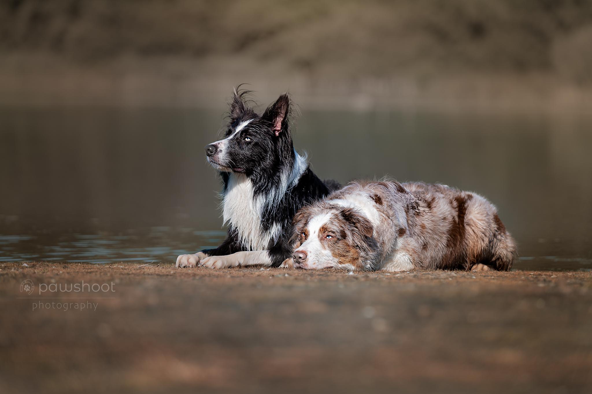 hondenportret Pawshoot hondenfotografie