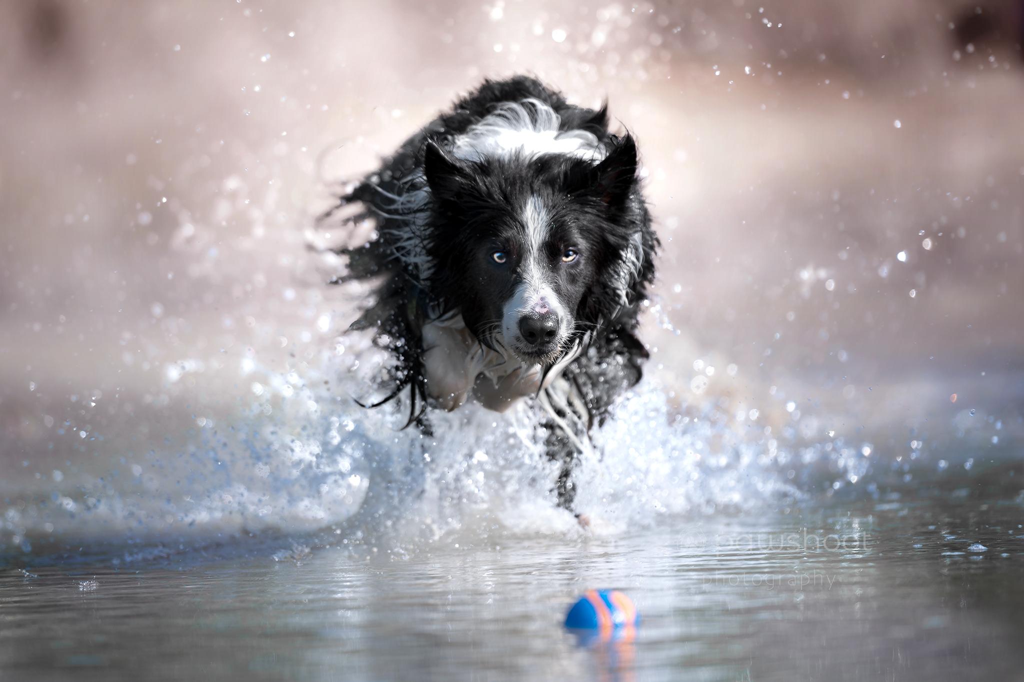 hond in actie Pawshoot hondenfotografie