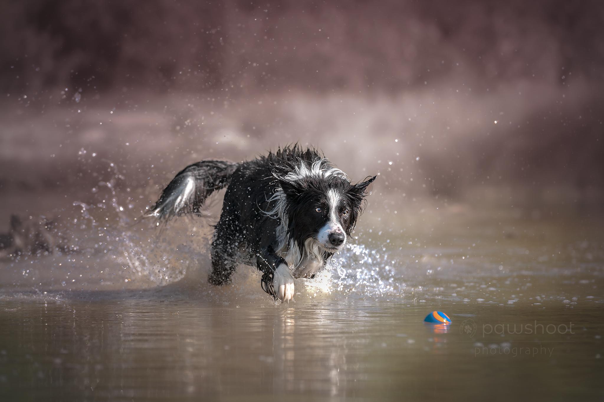 Hond in water Pawshoot hondenfotografie