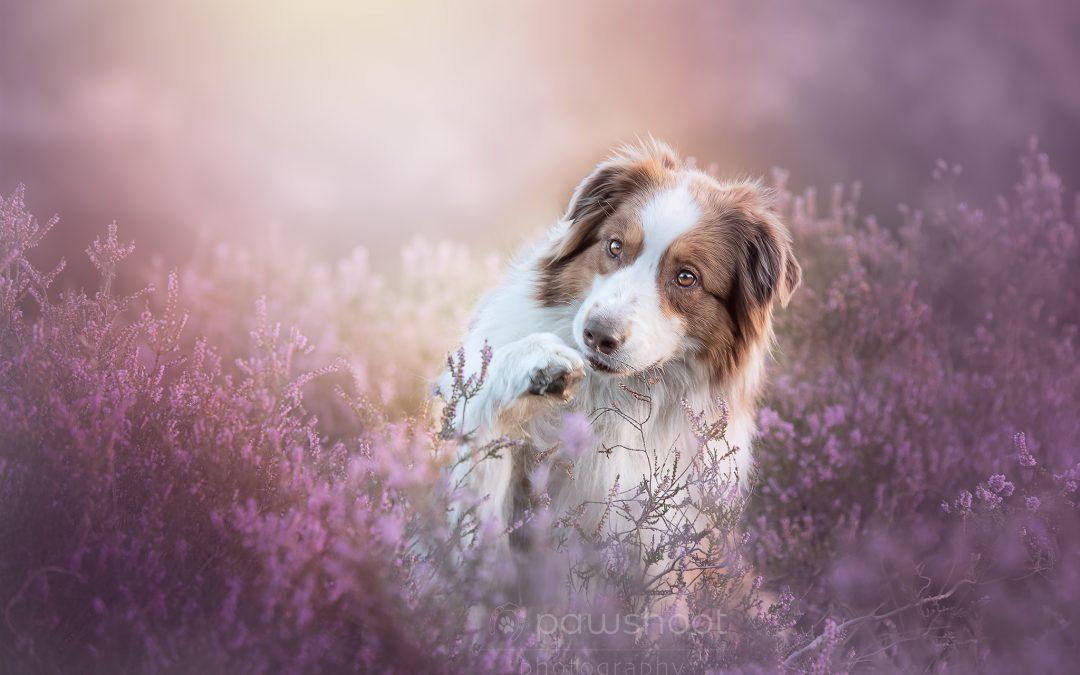 Pestkopjes in hondenfotografie en belichting en hoe ze te vermijden 2/4 !