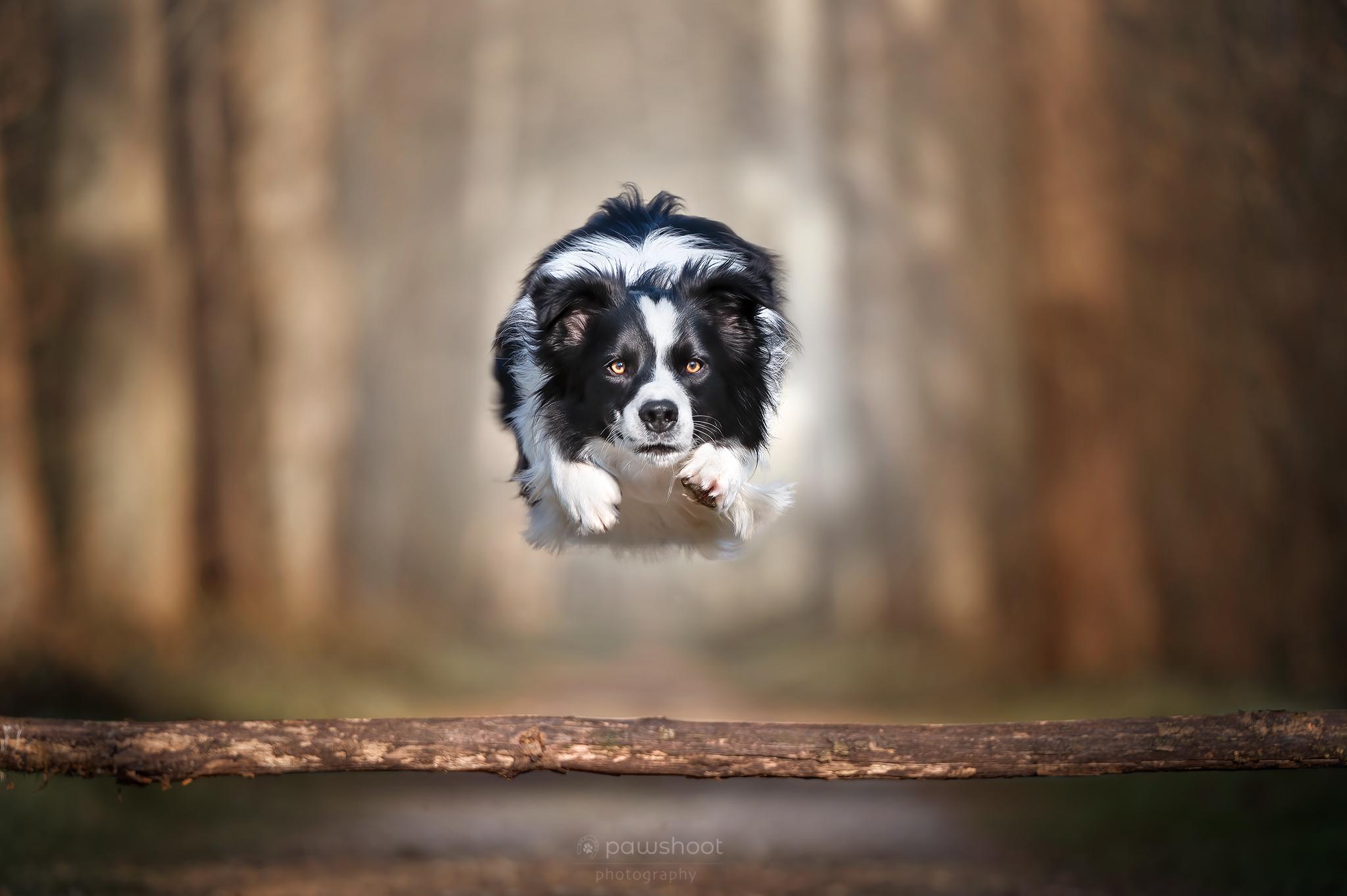 springende hond in actie Pawshoot hondenfotografie